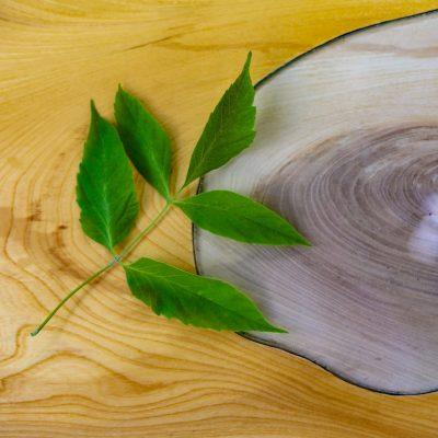 Le bois et le verre - Bruno Huissoud